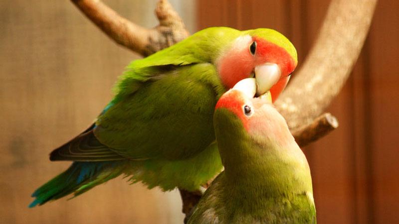 باغ پرندگان قمصر کاشان | جاهای دیدنی کاشان