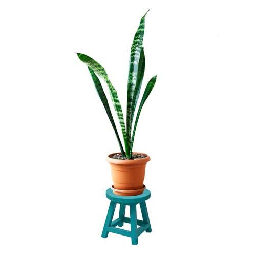 چهارپایه گلدان رنگی